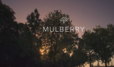Mulberry AW 15